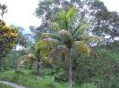 Jamaika 2003